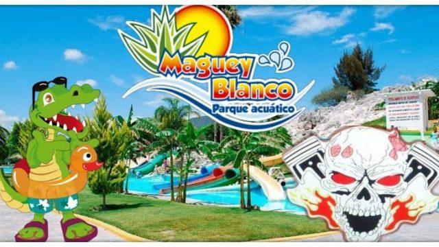 PODRIDOS AL MAGUEY BLANCO